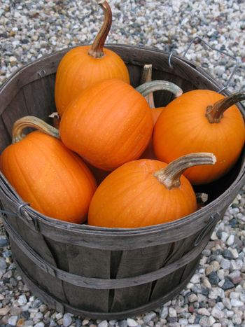 CarvedPumpkins.Bucket