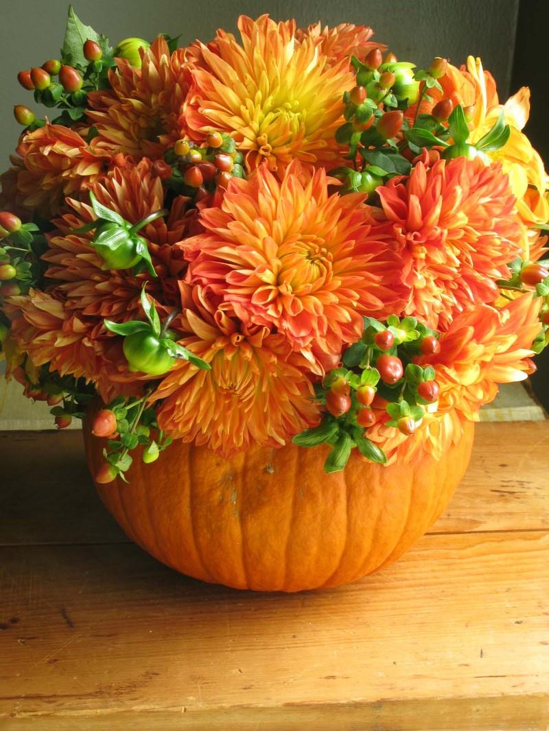 Orangepumpkinflowers