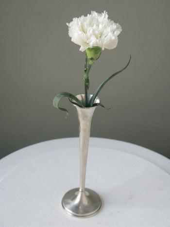 Carnation.Single