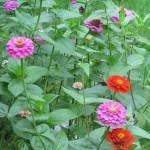 From my garden…
