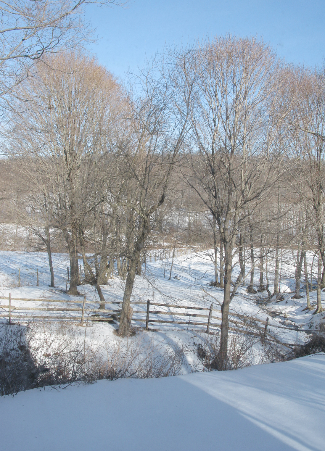like winter wonderland in the country christmascountry1 - Christmas In The Country