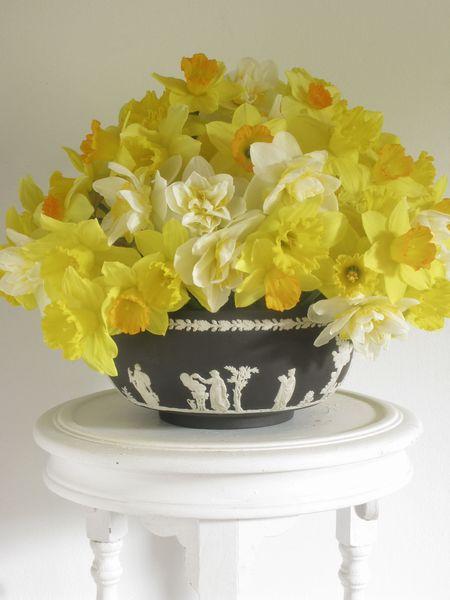 Ross.Daffodils
