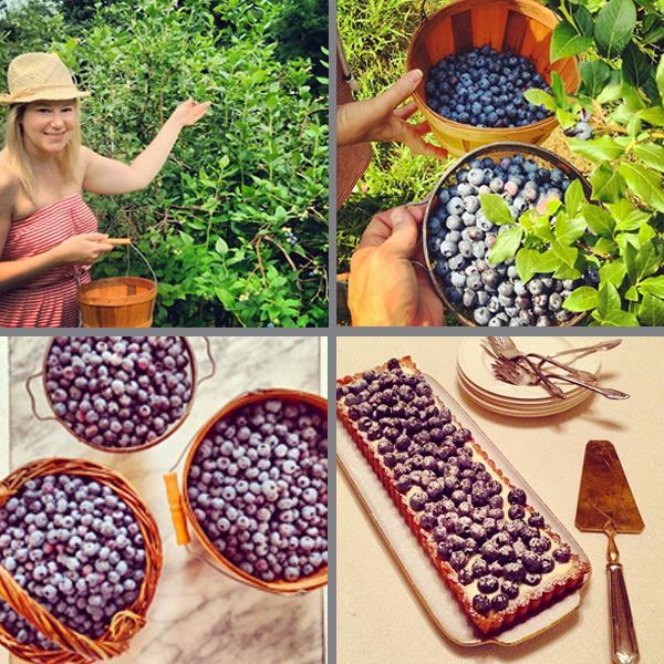 BlueberryQuad